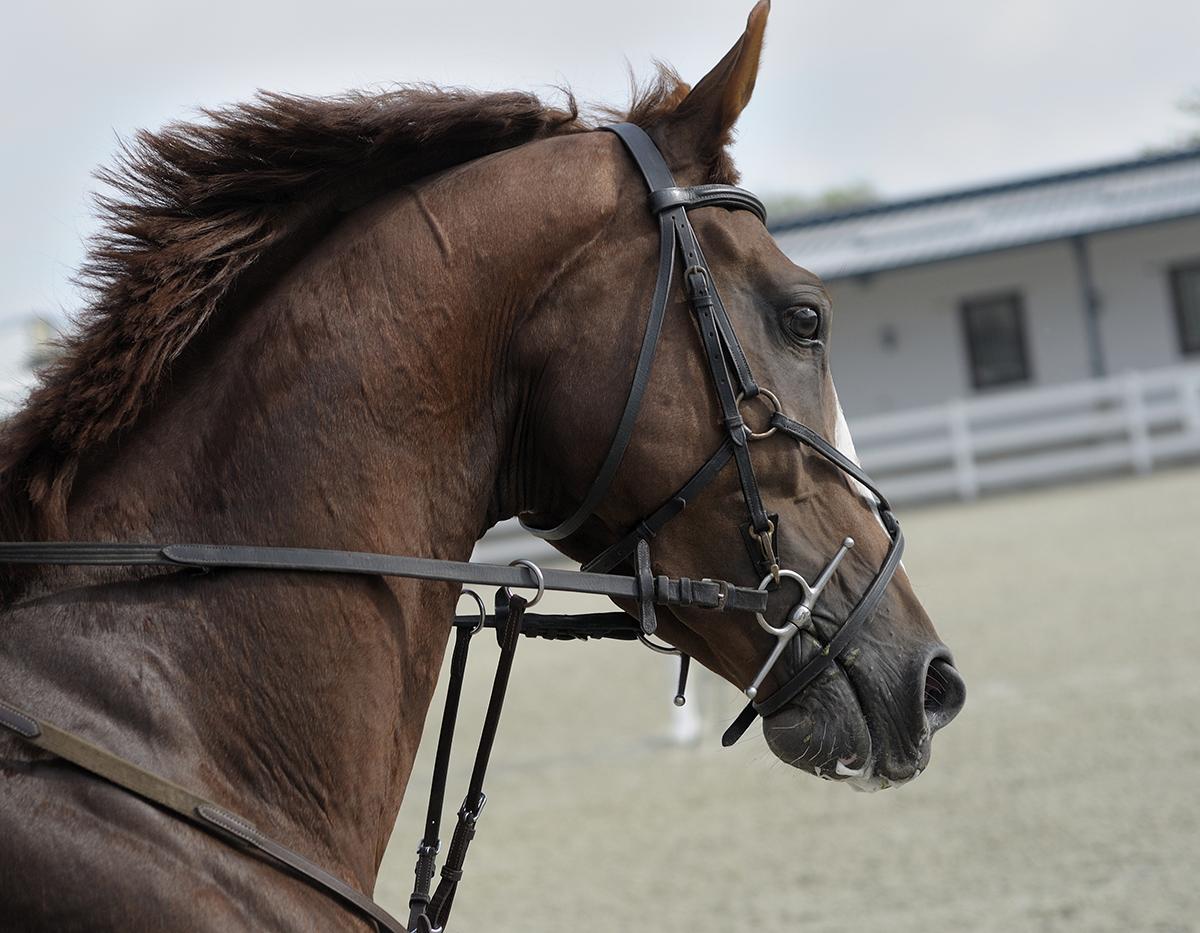 La Vereda Veterinarios - Clínica ambulante de caballos - Murcia