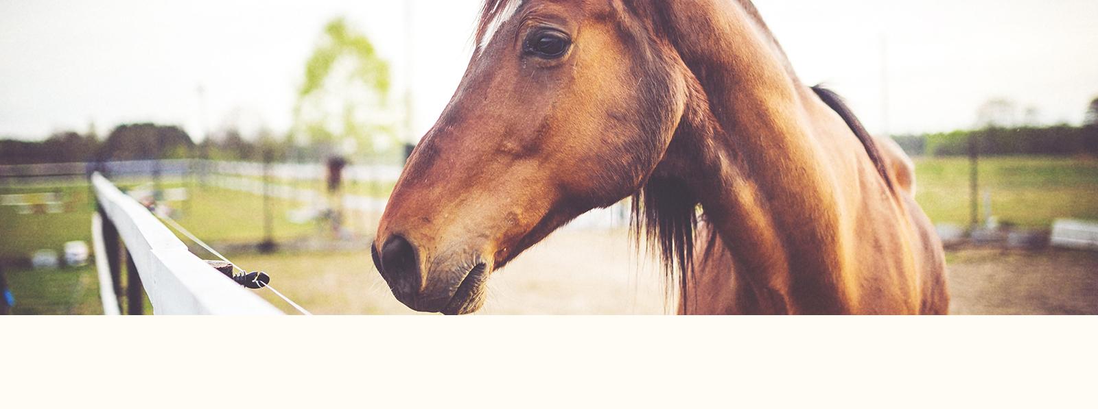 Clínica ambulante de caballos